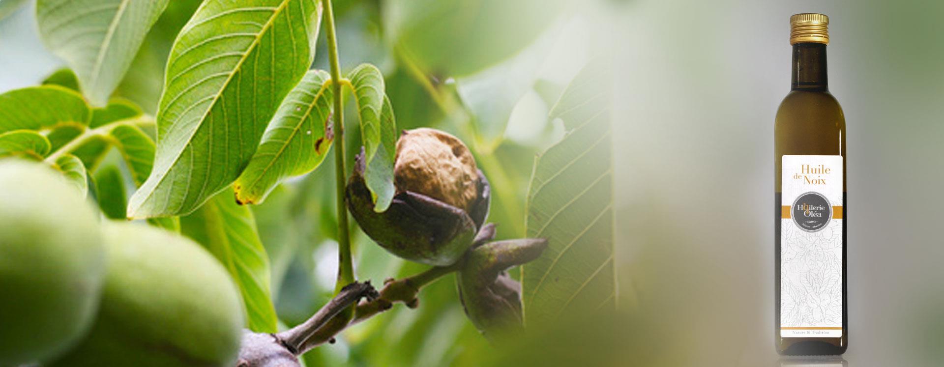 olea-accueil-notre-huilerie-huile-de-noix-2